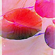 Lily Pad 3 Art Print
