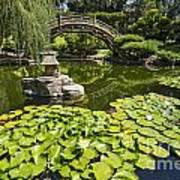 Lily Pad Garden - Japanese Garden At The Huntington Library. Art Print