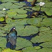 Lily Pad With Bird2 Art Print