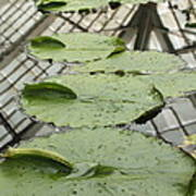 Lily Pads With Reflection Of Conservatory Roof Art Print