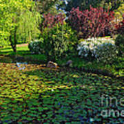 Lily Pond And Colorful Gardens Art Print
