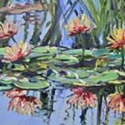 Lily Pond Reflections Art Print