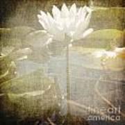 Lily Reflections Art Print