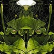 Lily Symmetry  Art Print
