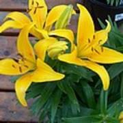 Lily Yellow Flower Art Print