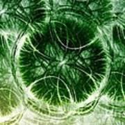 Lilypad - Fractal Art Print