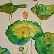 Lilypads 1 Art Print