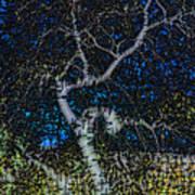 Limned Desert Tree Art Print