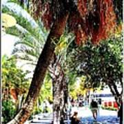 Lincoln Road In Miami Beach Art Print