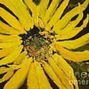 Linda's Arizona Sunflower 2 Art Print