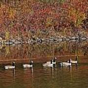 Line Of Geese On The Quinapoxet River Art Print