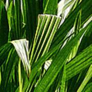 Lines Of Nature Art Print