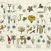 Linne's Plant System Art Print