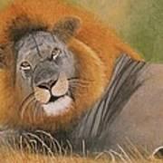 Lion At Rest Art Print