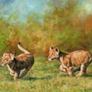 Lion Cubs Running Art Print