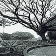 Lion Dog And Tree - Liliuokalani Park - Hawaii Art Print