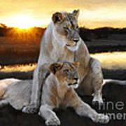 Lioness Protector Art Print