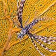 Lionfish Against Yellow Fan Coral Art Print
