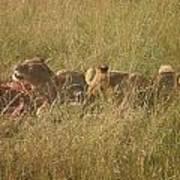 lions in the Maasai Mara park in kenya Art Print