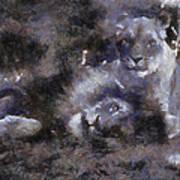 Lions Photo Art 02 Art Print