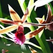 Lit Up Orchid Art Print