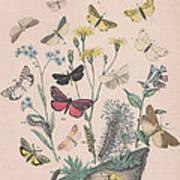 Lithosidae - Arctiidae Art Print