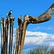 Little Bird On Tall Dead Saguaro Art Print
