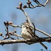 Little Bird Sings Art Print