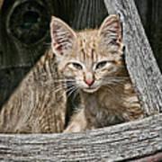 Little Charlie - Kitten By Wagon Wheel - Casper Wyoming Art Print