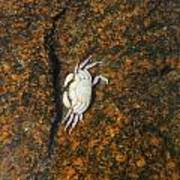 Little Dead Crab Under Water Art Print