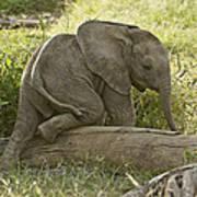 Little Elephant Big Log Art Print