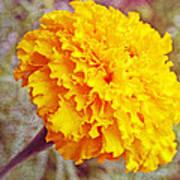 Little Golden  Marigold Art Print