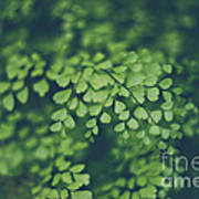 Little Green Leaves Art Print