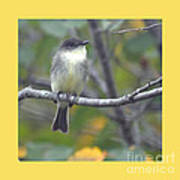 Little Lady Eastern Kingbird 4 Art Print