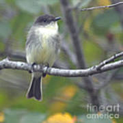 Little Lady Eastern Kingbird Art Print
