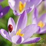 Little Ladybug On Flowers In My Garden Art Print
