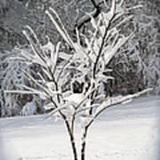 Little Snow Tree Art Print by Karen Adams