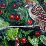 Little Sparrow In The Holly Art Print