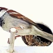 Little Sparrow Art Print by Karen Wiles