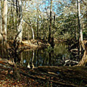 Little Withlacoochee River Art Print