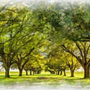 Live Oak Journey Paint Art Print