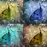 Lives Of A Butterfly Art Print