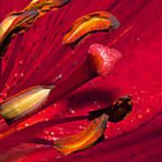 Living Inside A Lily Art Print