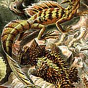 Lizard Detail II Art Print