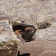 lizard from central Madagascar Art Print