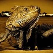 Lizard Sunbathing In Miami II Art Print
