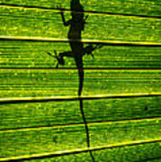 Lizard On The Other Side Art Print