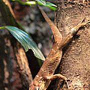 Lizard On The Tree Art Print