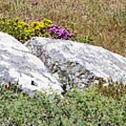Lizard Protected Granite Boulders Art Print