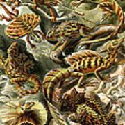Lizards Lizards And More Lizards Art Print